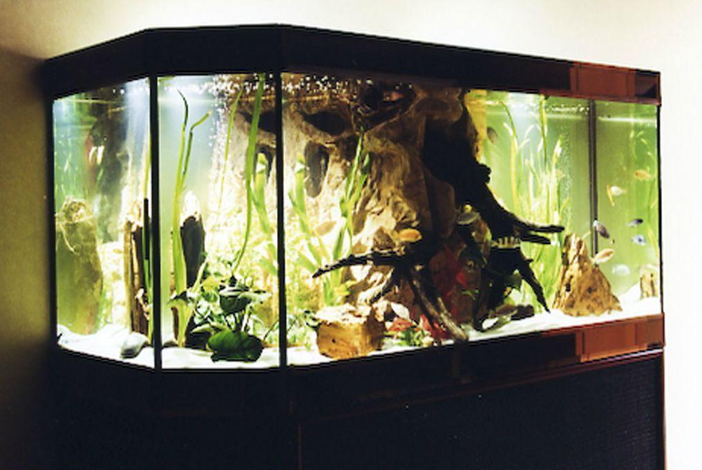 aquarium décor roche et bois central, maison de retraite, LYON